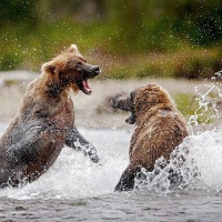 Going Pro: How To Become A Professional Wildlife Photographer with Chris McLennan