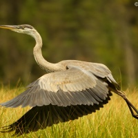 Wildlife Photography from a Kayak